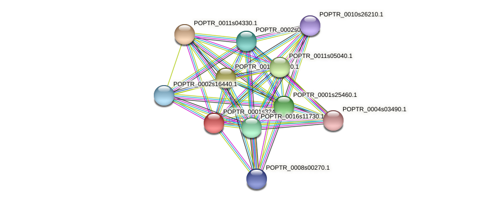 POPTR_0001s32480.1 protein (Populus trichocarpa) - STRING interaction network