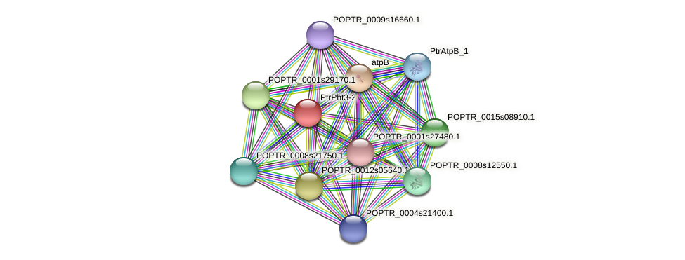 POPTR_0001s32950.1 protein (Populus trichocarpa) - STRING interaction network
