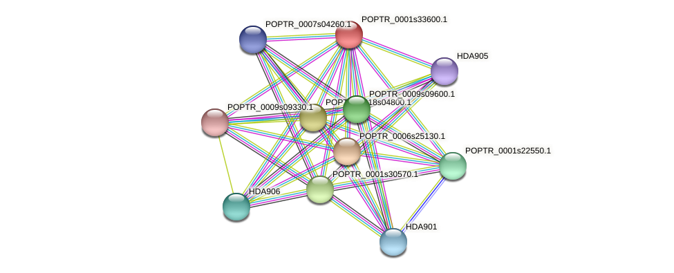 POPTR_0001s33600.1 protein (Populus trichocarpa) - STRING interaction network