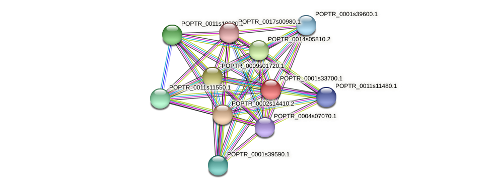 POPTR_0001s33700.1 protein (Populus trichocarpa) - STRING interaction network