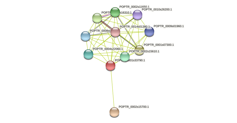 POPTR_0001s33790.1 protein (Populus trichocarpa) - STRING interaction network