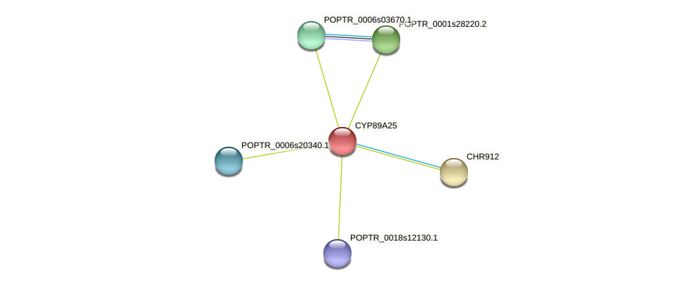 POPTR_0001s33810.1 protein (Populus trichocarpa) - STRING interaction network