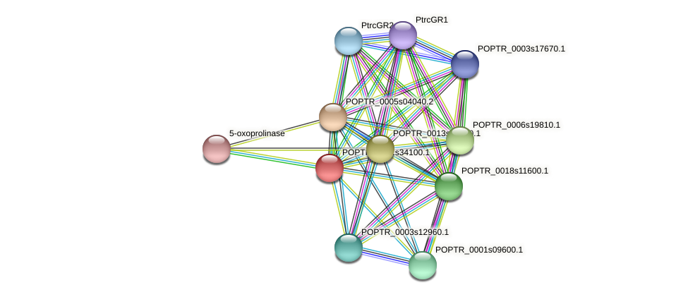 POPTR_0001s34100.1 protein (Populus trichocarpa) - STRING interaction network