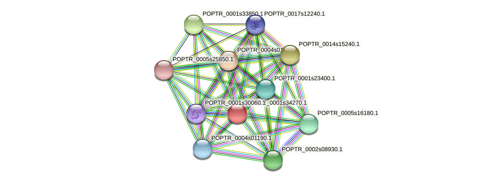 POPTR_0001s34270.1 protein (Populus trichocarpa) - STRING interaction network