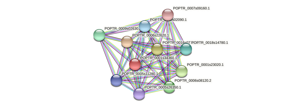 POPTR_0001s34360.1 protein (Populus trichocarpa) - STRING interaction network