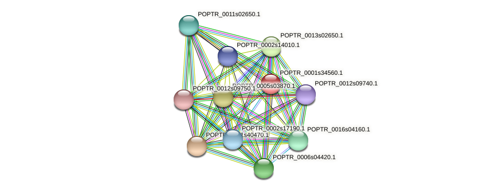 POPTR_0001s34560.1 protein (Populus trichocarpa) - STRING interaction network