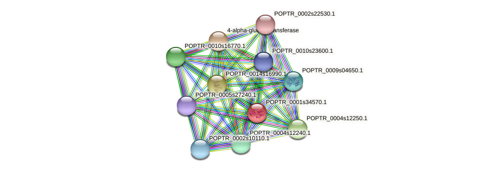 POPTR_0001s34570.1 protein (Populus trichocarpa) - STRING interaction network