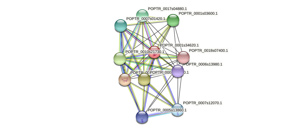 POPTR_0001s34620.1 protein (Populus trichocarpa) - STRING interaction network
