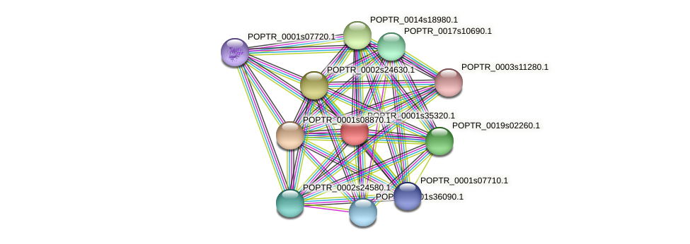 POPTR_0001s35320.1 protein (Populus trichocarpa) - STRING interaction network