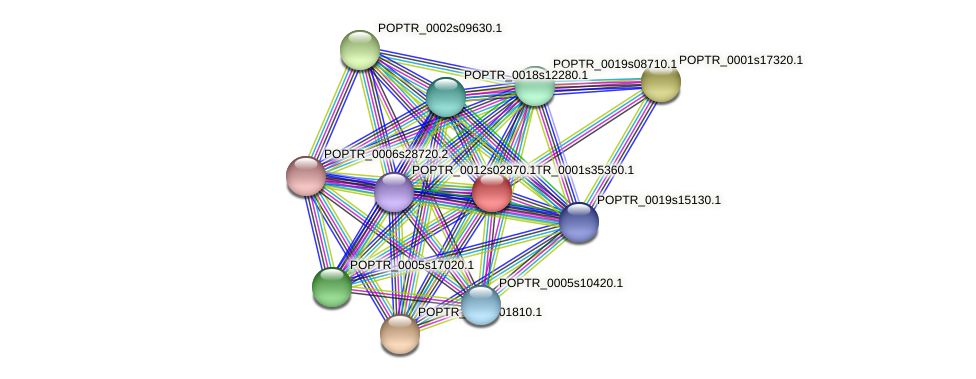 POPTR_0001s35360.1 protein (Populus trichocarpa) - STRING interaction network