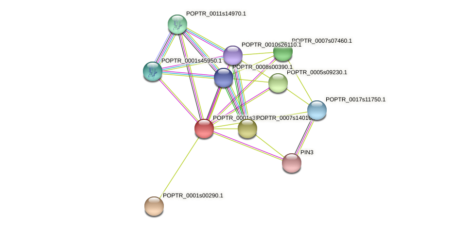 POPTR_0001s35390.1 protein (Populus trichocarpa) - STRING interaction network