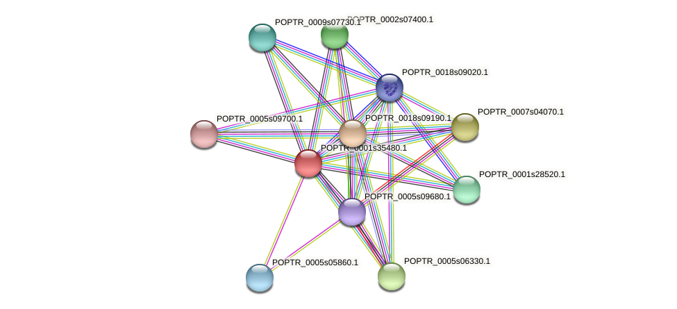 POPTR_0001s35480.1 protein (Populus trichocarpa) - STRING interaction network