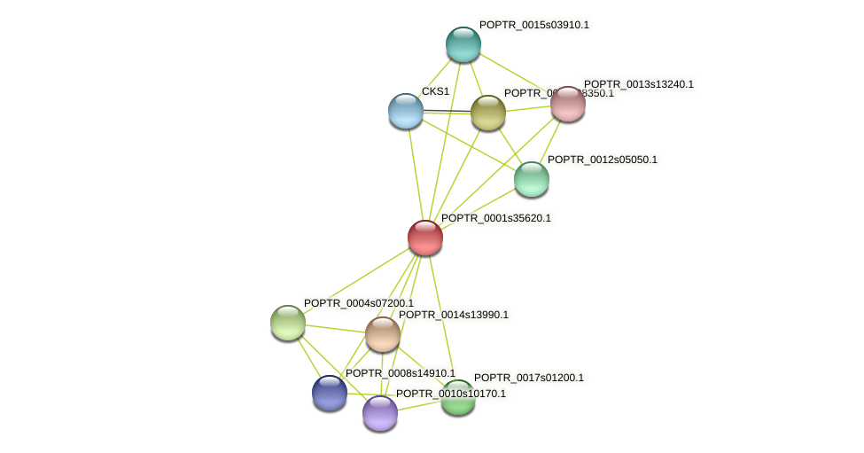 POPTR_0001s35620.1 protein (Populus trichocarpa) - STRING interaction network