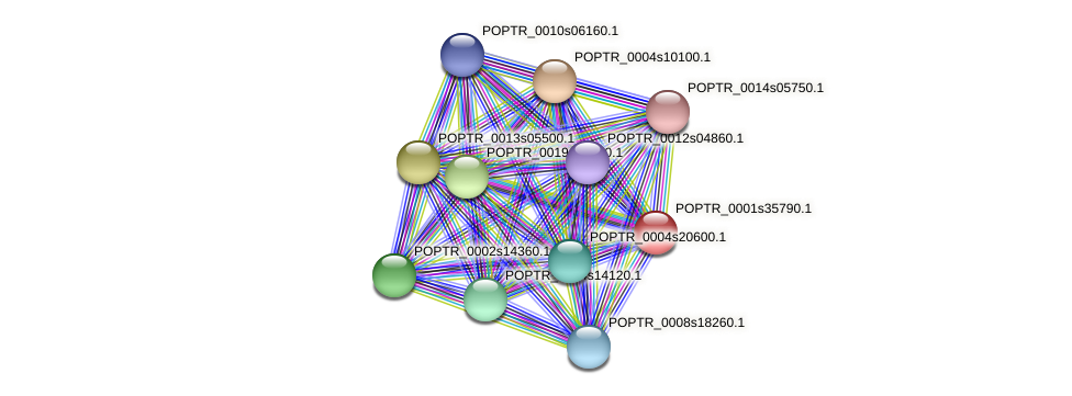 POPTR_0001s35790.1 protein (Populus trichocarpa) - STRING interaction network