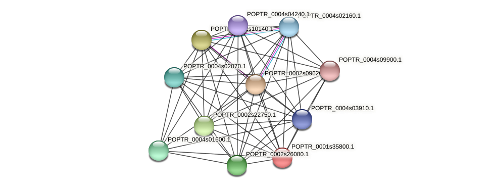 POPTR_0001s35800.1 protein (Populus trichocarpa) - STRING interaction network