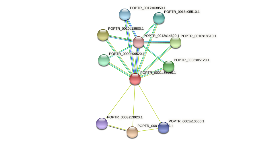 POPTR_0001s35960.1 protein (Populus trichocarpa) - STRING interaction network