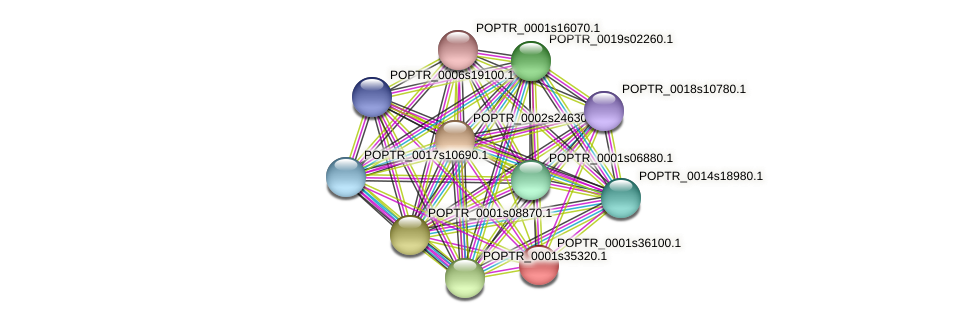 POPTR_0001s36100.1 protein (Populus trichocarpa) - STRING interaction network