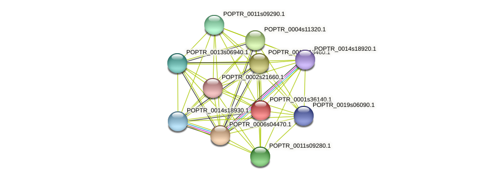 POPTR_0001s36140.1 protein (Populus trichocarpa) - STRING interaction network
