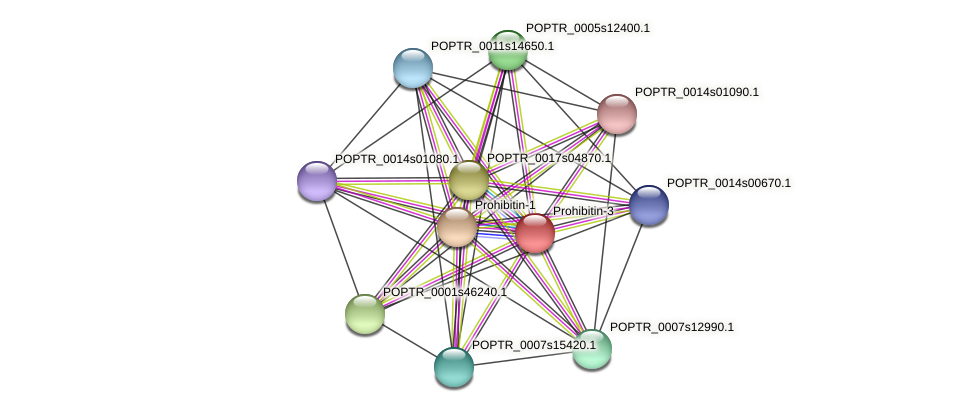 POPTR_0001s36300.1 protein (Populus trichocarpa) - STRING interaction network