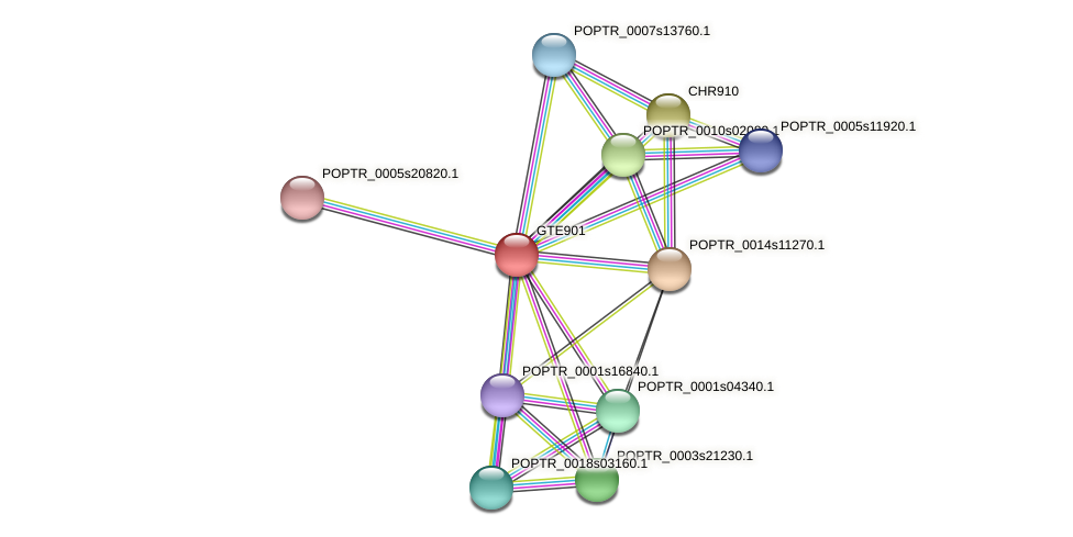 POPTR_0001s36530.1 protein (Populus trichocarpa) - STRING interaction network