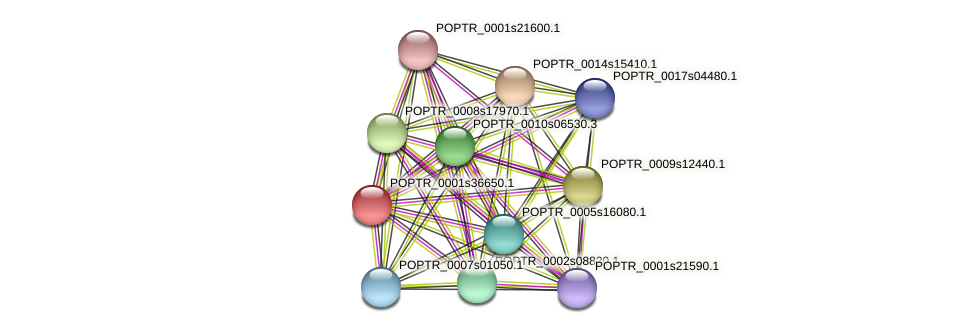 POPTR_0001s36650.1 protein (Populus trichocarpa) - STRING interaction network