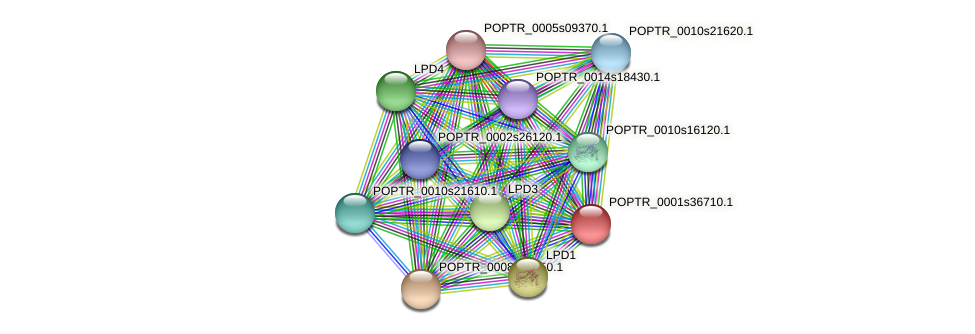 POPTR_0001s36710.1 protein (Populus trichocarpa) - STRING interaction network