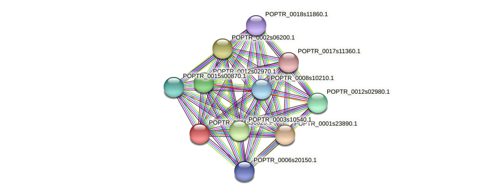 POPTR_0001s36820.1 protein (Populus trichocarpa) - STRING interaction network