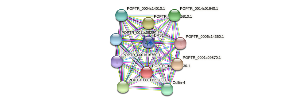 POPTR_0001s36830.1 protein (Populus trichocarpa) - STRING interaction network