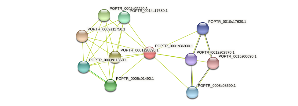 POPTR_0001s36930.1 protein (Populus trichocarpa) - STRING interaction network