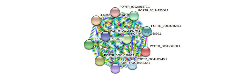 POPTR_0001s36960.1 protein (Populus trichocarpa) - STRING interaction network