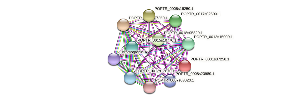 POPTR_0001s37250.1 protein (Populus trichocarpa) - STRING interaction network