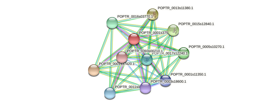 POPTR_0001s37570.1 protein (Populus trichocarpa) - STRING interaction network