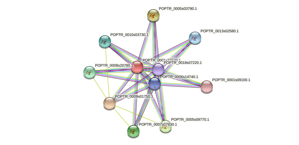 POPTR_0001s37620.1 protein (Populus trichocarpa) - STRING interaction network