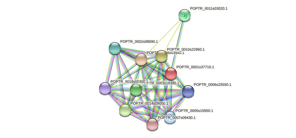 POPTR_0001s37710.1 protein (Populus trichocarpa) - STRING interaction network