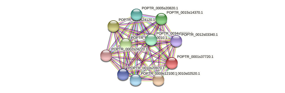 POPTR_0001s37720.1 protein (Populus trichocarpa) - STRING interaction network