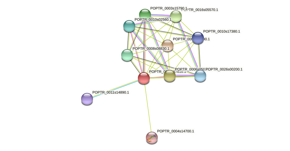 POPTR_0001s37810.1 protein (Populus trichocarpa) - STRING interaction network
