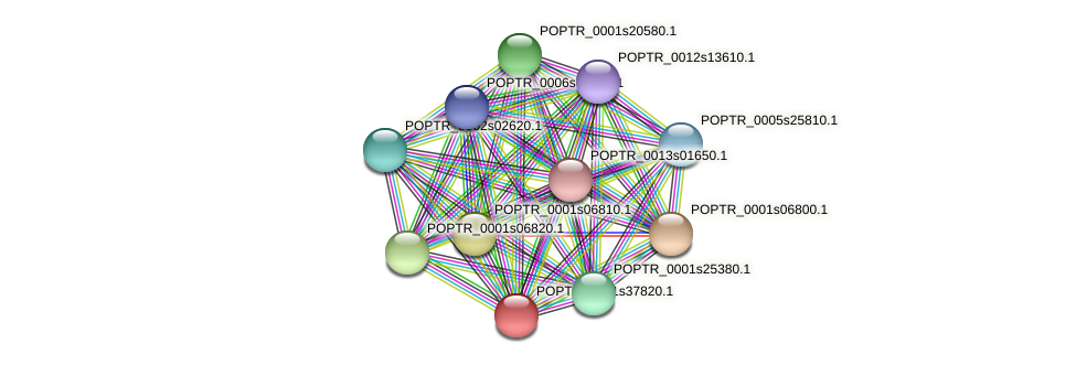 POPTR_0001s37820.1 protein (Populus trichocarpa) - STRING interaction network