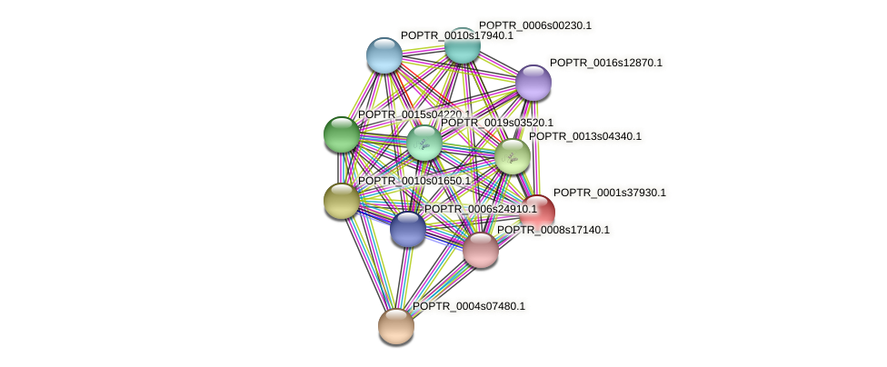 POPTR_0001s37930.1 protein (Populus trichocarpa) - STRING interaction network