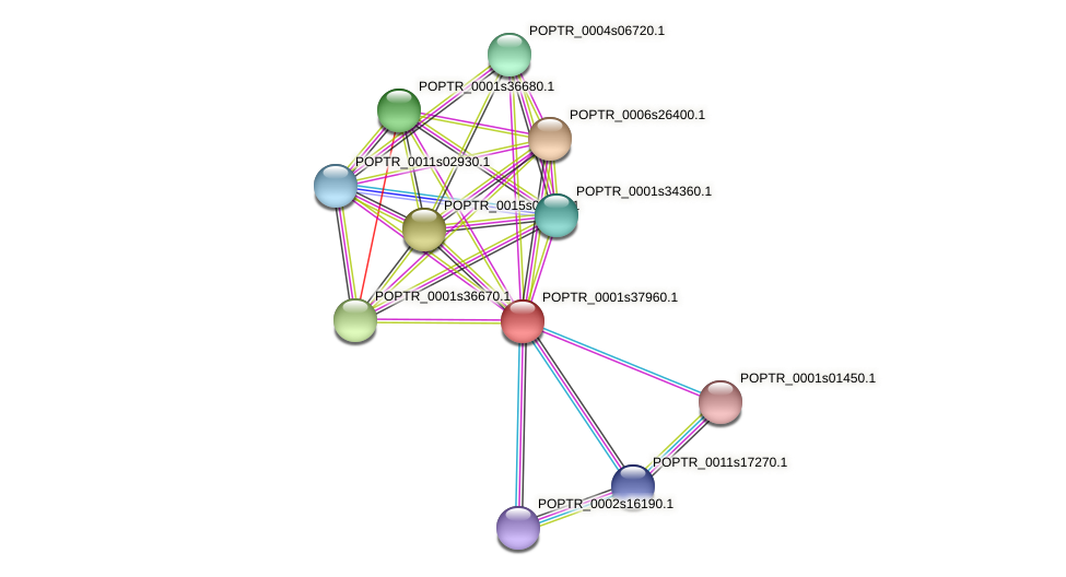 POPTR_0001s37960.1 protein (Populus trichocarpa) - STRING interaction network