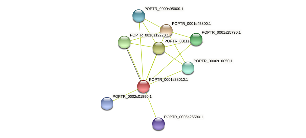 POPTR_0001s38010.1 protein (Populus trichocarpa) - STRING interaction network