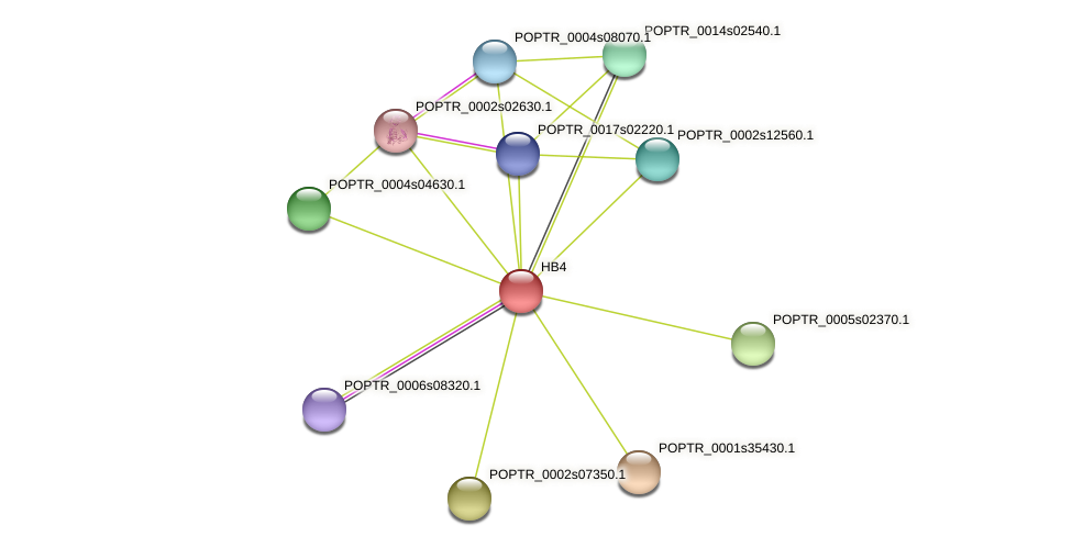 HB4 protein (Populus trichocarpa) - STRING interaction network