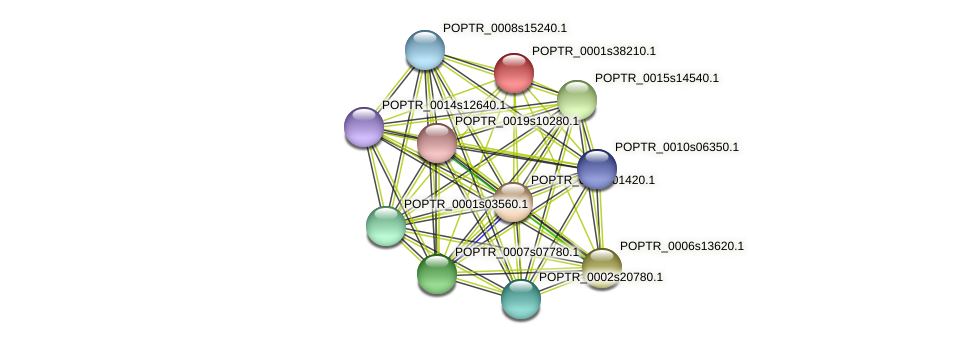 POPTR_0001s38210.1 protein (Populus trichocarpa) - STRING interaction network