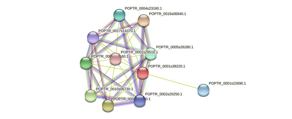 POPTR_0001s38220.1 protein (Populus trichocarpa) - STRING interaction network