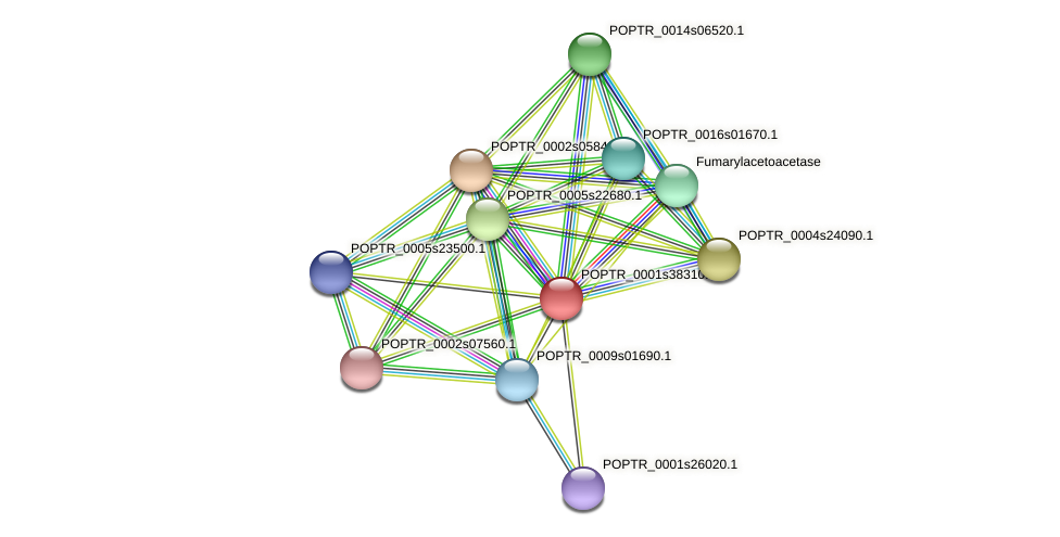 POPTR_0001s38310.1 protein (Populus trichocarpa) - STRING interaction network