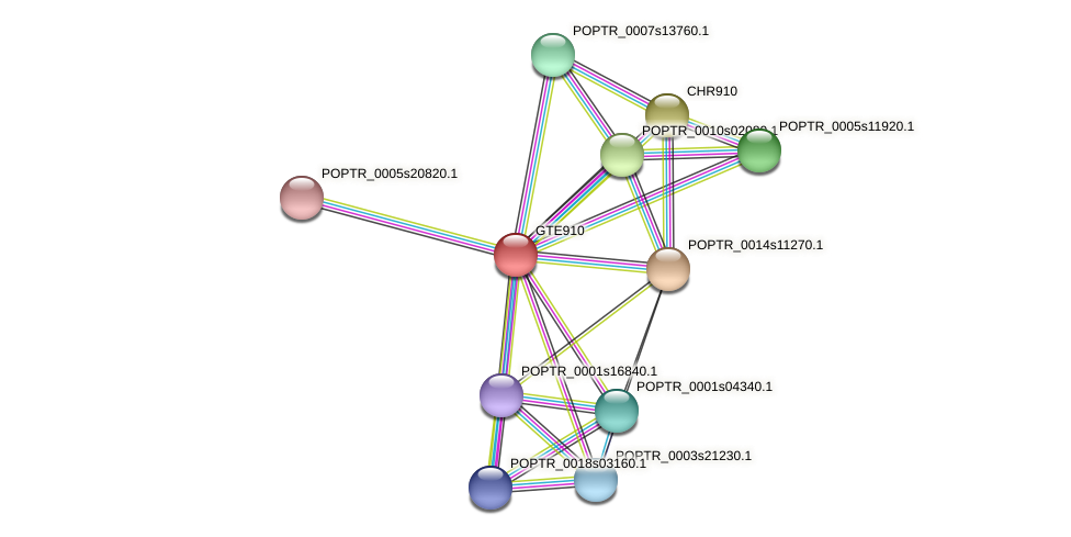 POPTR_0001s38550.1 protein (Populus trichocarpa) - STRING interaction network