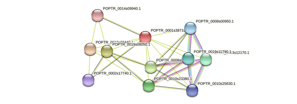 POPTR_0001s38710.1 protein (Populus trichocarpa) - STRING interaction network
