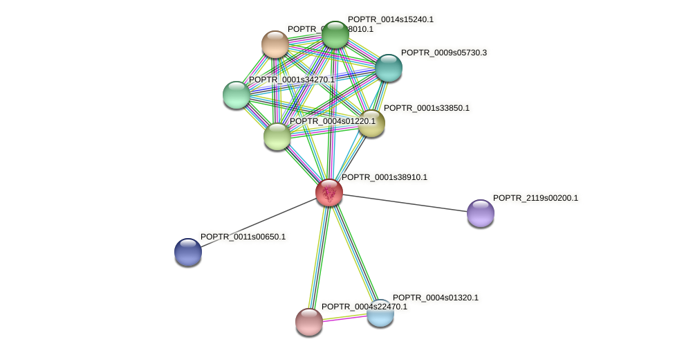 POPTR_0001s38910.1 protein (Populus trichocarpa) - STRING interaction network
