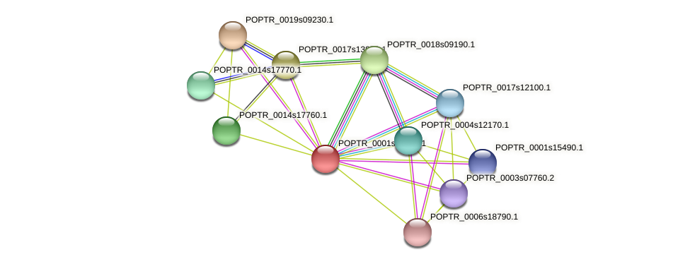 POPTR_0001s39190.1 protein (Populus trichocarpa) - STRING interaction network