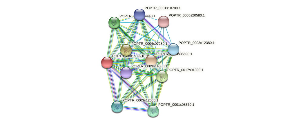POPTR_0001s39210.1 protein (Populus trichocarpa) - STRING interaction network