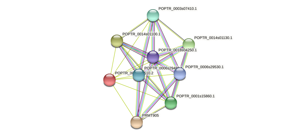 POPTR_0001s39510.1 protein (Populus trichocarpa) - STRING interaction network